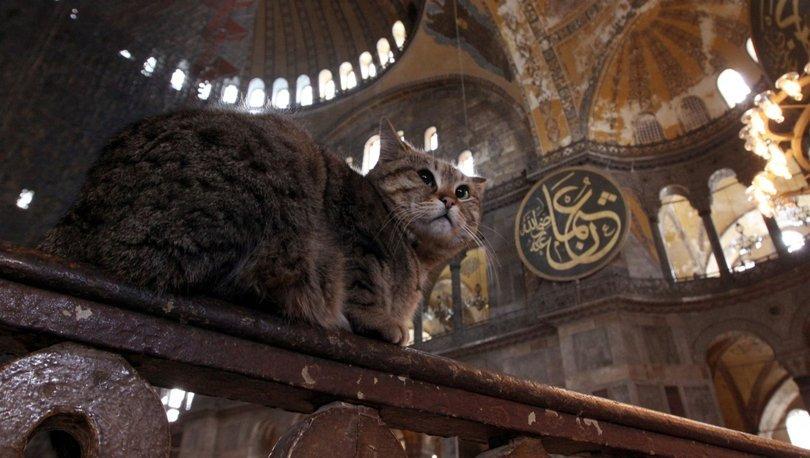 16 yıldır Ayasofya'da yaşayan kedinin durumu merak konusu