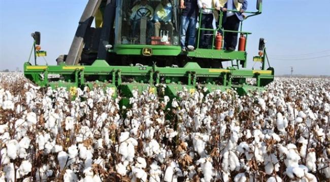 Pamukta üretim yüzde 40 düştü, ithalat yüzde 40 arttı