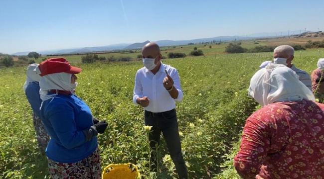 Bergamalı çiftçilerin 'su' isyanı... CHP'li Polat: Çiftçiye su yok, yandaşa var!