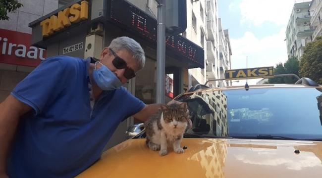 Alsancak'ın sevimli maskotu: Taksici Boncuk