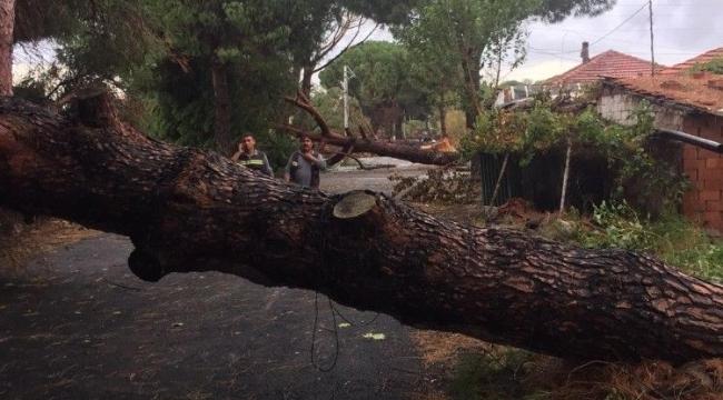 İzmir'de ağaçlar ve elektrik direği yola devrildi