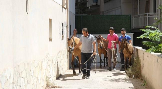 Karşıyaka'da atlar artık 'başıboş' kalmayacak!