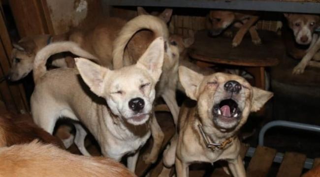 30 metrekarelik evde 164 köpekle yaşıyorlar