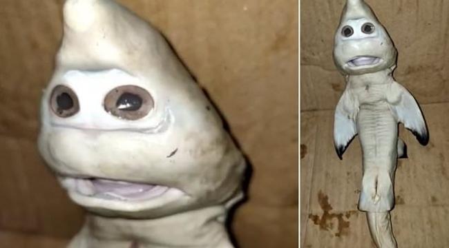 Endonezya'da insan yüzlü yavru köpek balığı bulundu