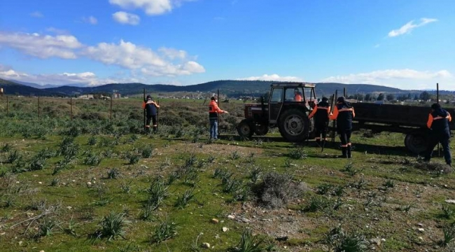 Santral arazisine 'organik tarım' yalanı tutmadı, Foça'da direkler söküldü!