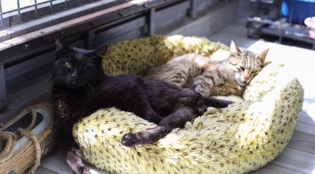 Deprem mağduru Beyaz, Engelli Kedi Evi'nde hayata tuttundu!