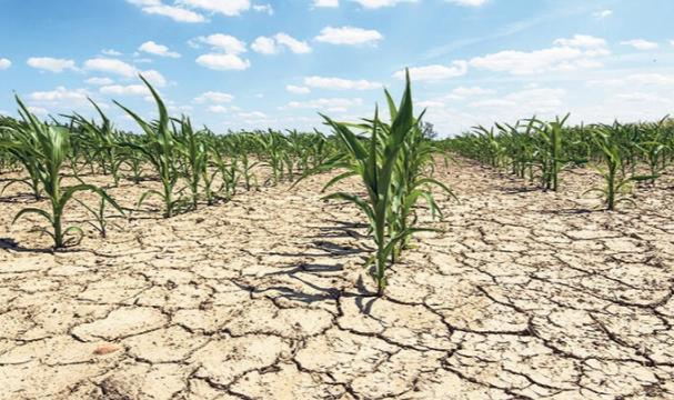 Son 20 yılın en kurak dönemi: Tarımsal afet yaşanıyor